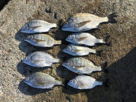 チンタ祭りからサイズアップ | 石川県 | 釣果情報 堤防 ジギング 船釣 管理釣り場 釣り情報 | カンパリ全国版