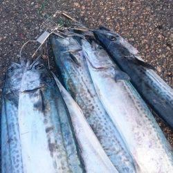 サゴシ | 富山県 | 釣果情報 堤防 ジギング 船釣 管理釣り場 釣り情報 | カンパリ全国版