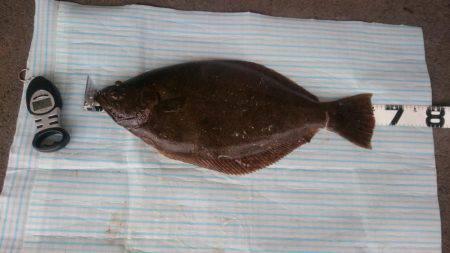アジののませ釣りでヒラメ2匹!   島根   釣果情報 堤防 ジギング 船釣 管理釣り場 釣り情報   カンパリ全国版