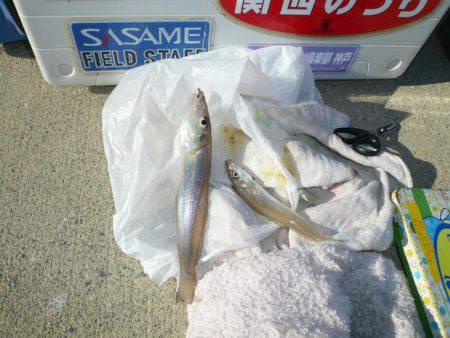 今回も富島漁港でキス狙い