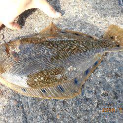 鹿島港魚釣園 釣果