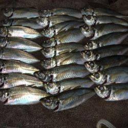 サビキ釣りは釣り入門の基本!サビキ釣りを徹底解説!