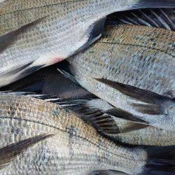 幸福丸 釣果 | 熊本 | 釣果情報 堤防 ジギング 船釣 管理釣り場 釣り情報 | カンパリ全国版