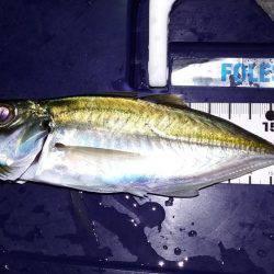釣りのサンタさんこない   福井県   釣果情報 堤防 ジギング 船釣 管理釣り場 釣り情報   カンパリ全国版