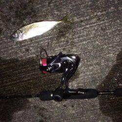 アジング | 兵庫県(日本海側) | 釣果情報 堤防 ジギング 船釣 管理釣り場 釣り情報 | カンパリ全国版