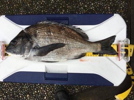 歳無しならず | 石川県 | 釣果情報 堤防 ジギング 船釣 管理釣り場 釣り情報 | カンパリ全国版