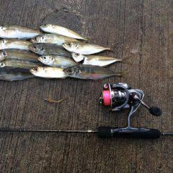 アジング   兵庫県(日本海側)   釣果情報 堤防 ジギング 船釣 管理釣り場 釣り情報   カンパリ全国版