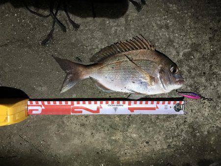 マイクロジグでの五目釣り。 | 香川 | 釣果情報 堤防 ジギング 船釣 管理釣り場 釣り情報 | カンパリ全国版