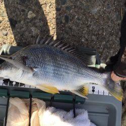 強風アジング | 愛知県 | 釣果情報 堤防 ジギング 船釣 管理釣り場 釣り情報 | カンパリ全国版