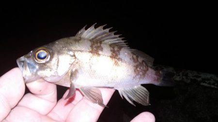 年内最終釣行 | 福井県 | 釣果情報 堤防 ジギング 船釣 管理釣り場 釣り情報 | カンパリ全国版