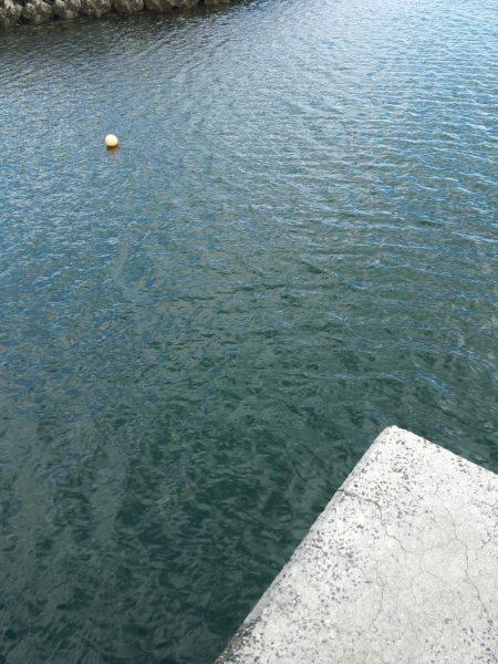 井口港でちょい投げに良型キス | 広島 | 釣果情報 堤防 ジギング 船釣 管理釣り場 釣り情報 | カンパリ全国版