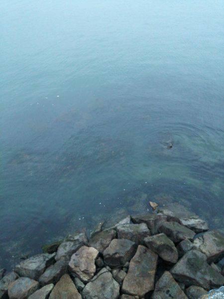 丸石港で雑魚釣り | 広島 | 釣果情報 堤防 ジギング 船釣 管理釣り場 釣り情報 | カンパリ全国版
