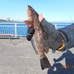 鹿島港魚釣園 釣果 | 茨城 | 釣果情報 堤防 ジギング 船釣 管理釣り場 釣り情報 | カンパリ全国版