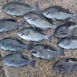 千鳥丸 釣果   島根   釣果情報 堤防 ジギング 船釣 管理釣り場 釣り情報   カンパリ全国版