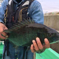 由良渡船 釣果   山形   釣果情報 堤防 ジギング 船釣 管理釣り場 釣り情報   カンパリ全国版