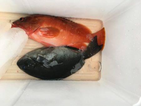 鵜来島家本渡船 釣果 | 高知 | 釣果情報 堤防 ジギング 船釣 管理釣り場 釣り情報 | カンパリ全国版