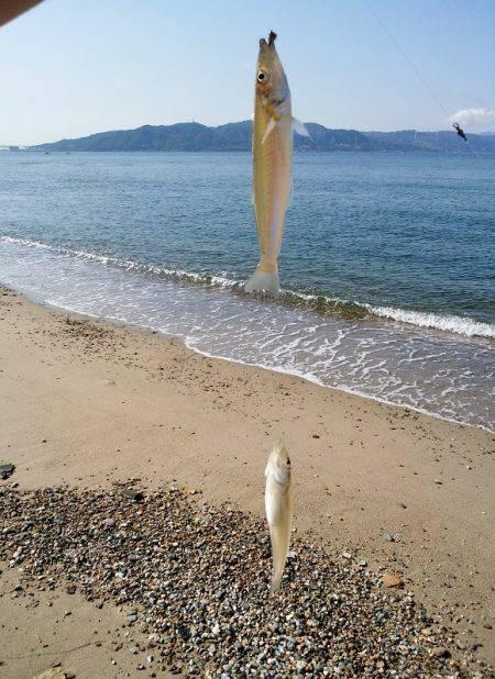 砂浜から大遠投!キスの投げ釣り(引き釣り)講座