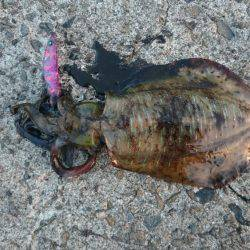 鹿児島釣行 | 鹿児島 | 釣果情報 堤防 ジギング 船釣 管理釣り場 釣り情報 | カンパリ全国版