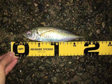 ライトゲーム | 兵庫県(日本海側) | 釣果情報 堤防 ジギング 船釣 管理釣り場 釣り情報 | カンパリ全国版