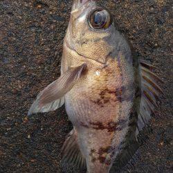 ミップル様周辺にて(笑)。 | 京都府 | 釣果情報 堤防 ジギング 船釣 管理釣り場 釣り情報 | カンパリ全国版