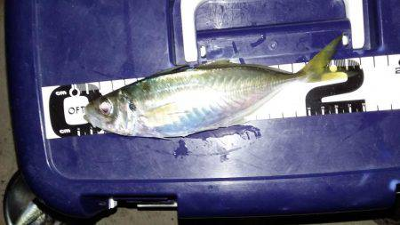 もお終了か? | 福井県 | 釣果情報 堤防 ジギング 船釣 管理釣り場 釣り情報 | カンパリ全国版