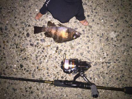 ゲキ渋   淡路島   釣果情報 堤防 ジギング 船釣 管理釣り場 釣り情報   カンパリ全国版