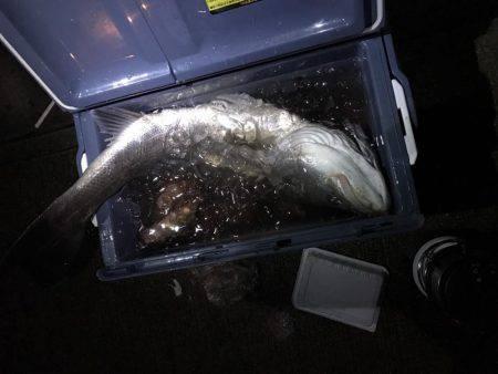 釣り部で舞洲へ | 大阪府 | 釣果情報 堤防 ジギング 船釣 管理釣り場 釣り情報 | カンパリ全国版