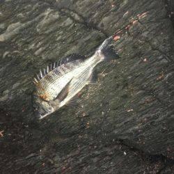 イマイチの初釣り(>_<) | 山口 | 釣果情報 堤防 ジギング 船釣 管理釣り場 釣り情報 | カンパリ全国版