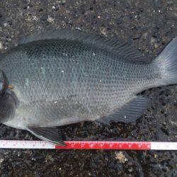 た~~いりょう | 鳥取 | 釣果情報 堤防 ジギング 船釣 管理釣り場 釣り情報 | カンパリ全国版