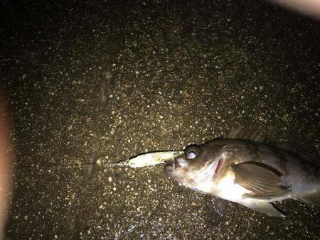 メバリング   京都府   釣果情報 堤防 ジギング 船釣 管理釣り場 釣り情報   カンパリ全国版