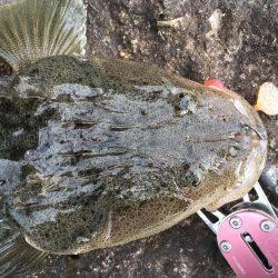 マゴチさん   和歌山県   釣果情報 堤防 ジギング 船釣 管理釣り場 釣り情報   カンパリ全国版