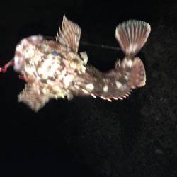 崇之&進一   和歌山県   釣果情報 堤防 ジギング 船釣 管理釣り場 釣り情報   カンパリ全国版