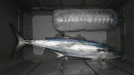 やっと釣れたー | 京都府 | 釣果情報 堤防 ジギング 船釣 管理釣り場 釣り情報 | カンパリ全国版