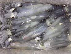 ライトエギング   兵庫県(瀬戸内海側)   釣果情報 堤防 ジギング 船釣 管理釣り場 釣り情報   カンパリ全国版