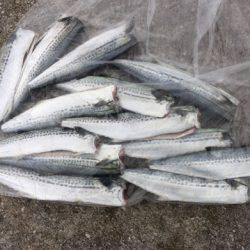 サゴシの群れ接岸   鳥取   釣果情報 堤防 ジギング 船釣 管理釣り場 釣り情報   カンパリ全国版