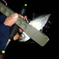 アジ調査   大阪府   釣果情報 堤防 ジギング 船釣 管理釣り場 釣り情報   カンパリ全国版