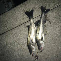 マイワシパターンのシーバス健在も…   兵庫県(瀬戸内海側)   釣果情報 堤防 ジギング 船釣 管理釣り場 釣り情報   カンパリ全国版