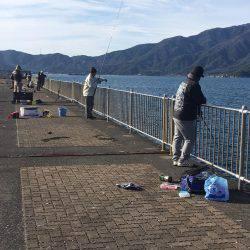 初釣りサゴシ