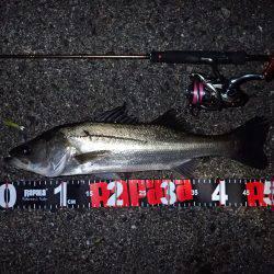 風&ウネリに苦戦! | 大阪府 | 釣果情報 堤防 ジギング 船釣 管理釣り場 釣り情報 | カンパリ全国版