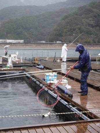 松名瀬フィッシングパーク 釣果   三重県   釣果情報 堤防 ジギング 船釣 管理釣り場 釣り情報   カンパリ全国版