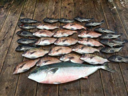 由良海上釣り堀 海人 釣果 | 淡路島 | 釣果情報 堤防 ジギング 船釣 管理釣り場 釣り情報 | カンパリ全国版
