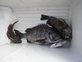 バラモン1号 釣果   長崎   釣果情報 堤防 ジギング 船釣 管理釣り場 釣り情報   カンパリ全国版