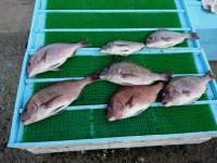 和歌山マリーナシティ釣り堀 釣果 | 和歌山県 | 釣果情報 堤防 ジギング 船釣 管理釣り場 釣り情報 | カンパリ全国版
