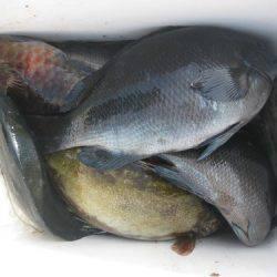 濱田渡船 釣果 | 愛媛 | 釣果情報 堤防 ジギング 船釣 管理釣り場 釣り情報 | カンパリ全国版