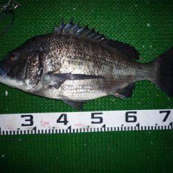 海山フィッシングセンター 釣果 | 三重県 | 釣果情報 堤防 ジギング 船釣 管理釣り場 釣り情報 | カンパリ全国版