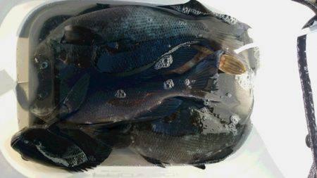 しば渡船 釣果   愛媛   釣果情報 堤防 ジギング 船釣 管理釣り場 釣り情報   カンパリ全国版