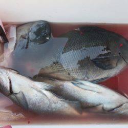 千津丸 釣果 | 宮崎 | 釣果情報 堤防 ジギング 船釣 管理釣り場 釣り情報 | カンパリ全国版