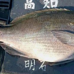 しば渡船 釣果 | 愛媛 | 釣果情報 堤防 ジギング 船釣 管理釣り場 釣り情報 | カンパリ全国版