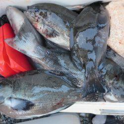 千津丸 釣果   宮崎   釣果情報 堤防 ジギング 船釣 管理釣り場 釣り情報   カンパリ全国版