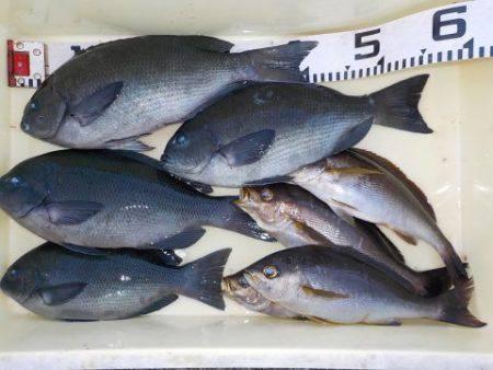 大幸丸 釣果   徳島   釣果情報 堤防 ジギング 船釣 管理釣り場 釣り情報   カンパリ全国版